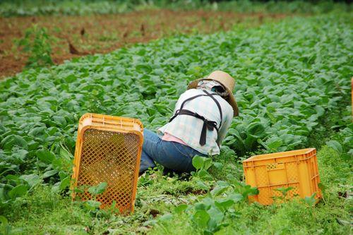 <農作業の風景>