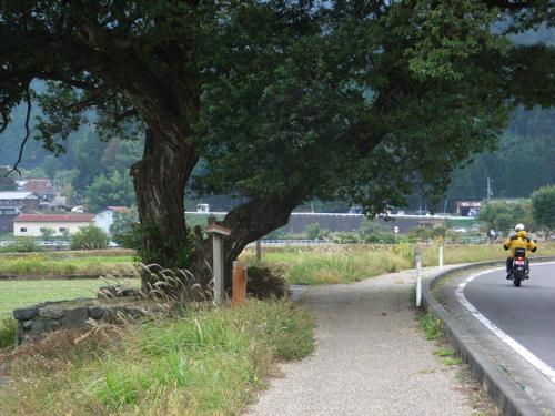 <羽衣伝説の柳の木>