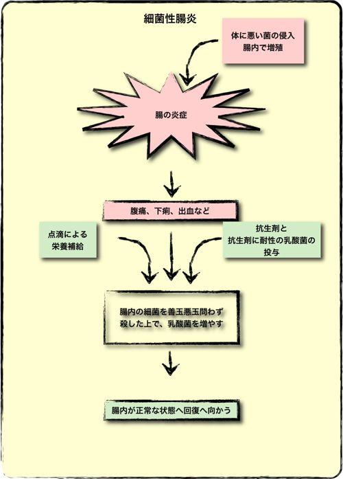 <細菌性腸炎と乳酸菌>