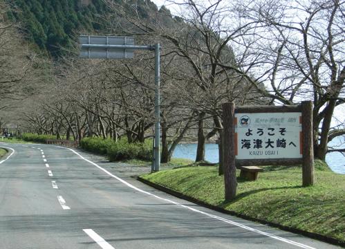<海津大崎の桜並木の入り口>