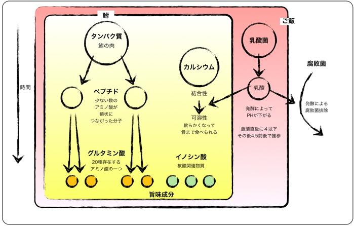 <鮒寿司の桶の中の時間と変化>