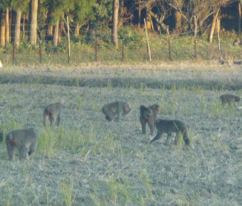 <国道沿いで見かけた猿の集団(の一部)特に珍しくはありません>