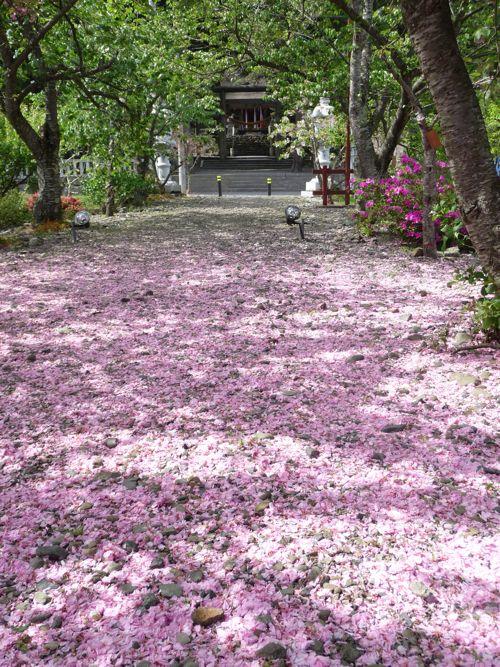 <2010.5.9 伊香具神社参道>