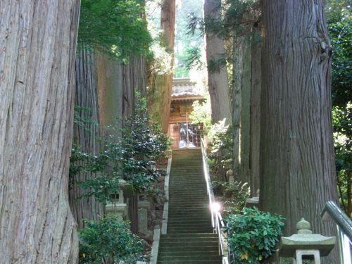 <西山八幡神社 豊公薩摩大杉>