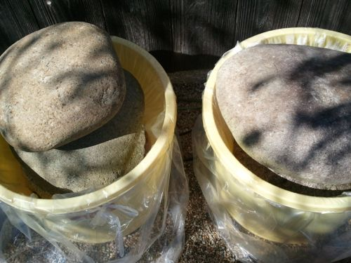<2種類の乾燥を経た鮒寿司>